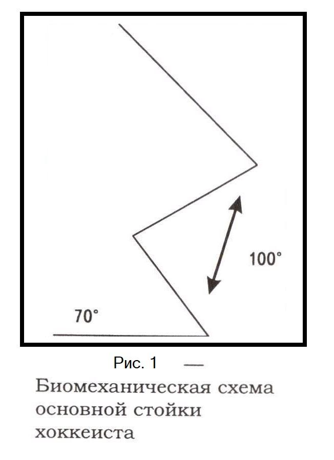 Биомеханическая схема основной стойки хоккеиста