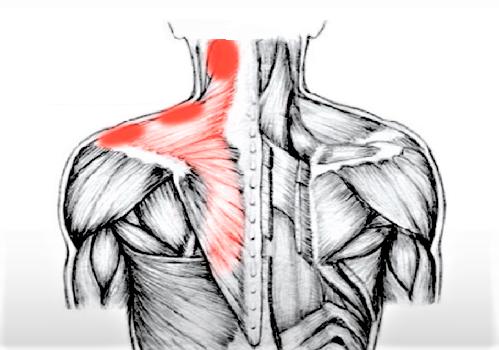 Означает ли боль в мышцах эффективную тренировку?